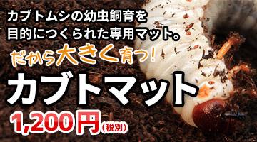カブトマット 昆虫マット 販売 通販 購入
