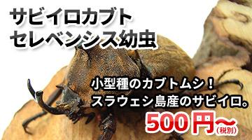 サビイロカブト(セレベンシス)幼虫 販売 通販 専門店 購入