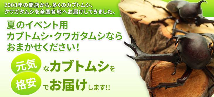 イベント用カブトムシ・クワガタムシの販売 卸し 展示