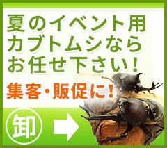 イベント用カブトムシ・クワガタムシの卸し販売