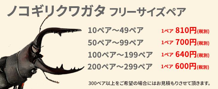 ノコギリクワガタの価格リスト