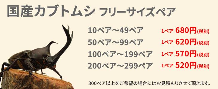 国産カブトムシの価格リスト