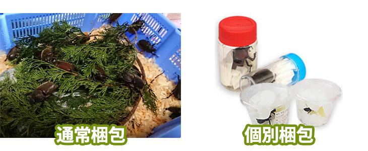 イベント用カブトムシの梱包方法