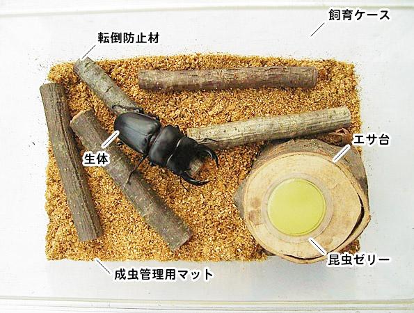 カブトムシ・クワガタムシの成虫飼育に必要な用品