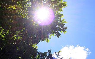 オオクワガタの産卵には季節(温度)が大切