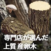 クヌギ産卵木 販売 通販 専門店 購入