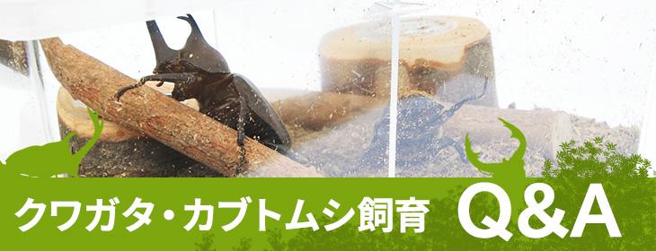 クワガタ・カブトムシ飼育QandA